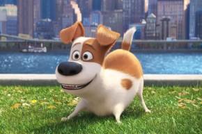 Max en Mascotas